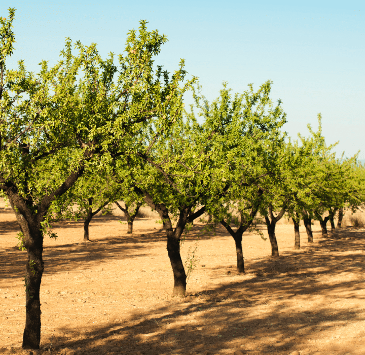 automated irrigation use cases almonds